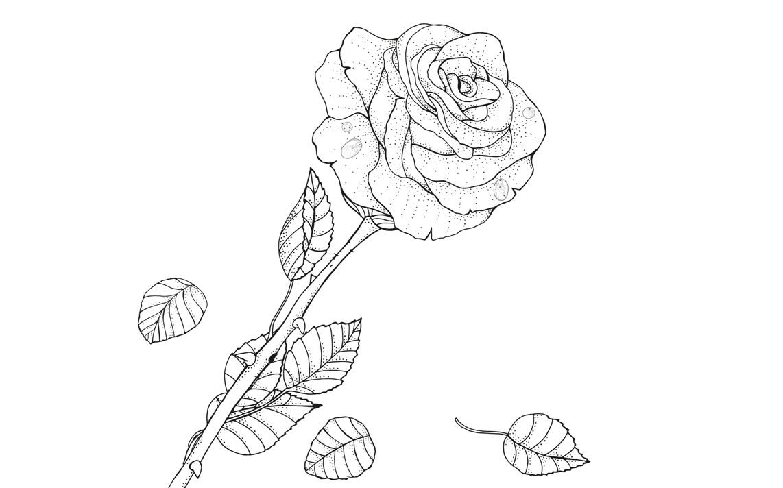 Раскраска Роза после дождя