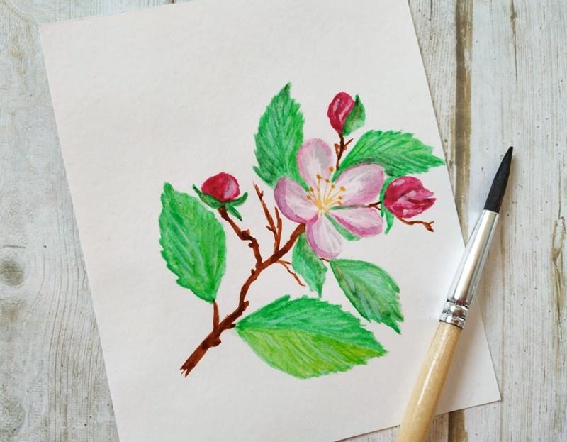 Как нарисовать акварелью веточку яблони