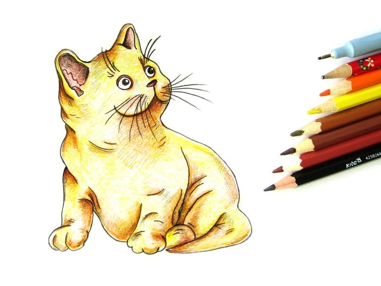 Как нарисовать кошку цветными карандашами