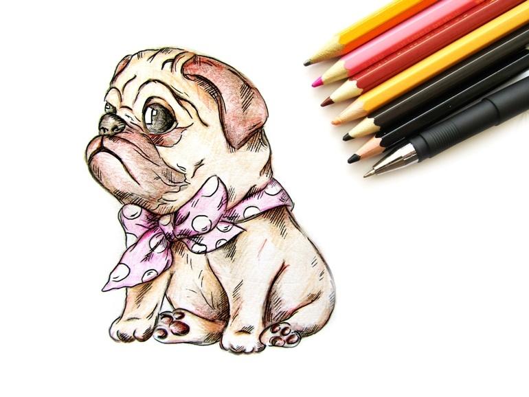 Как нарисовать мопса цветными карандашами