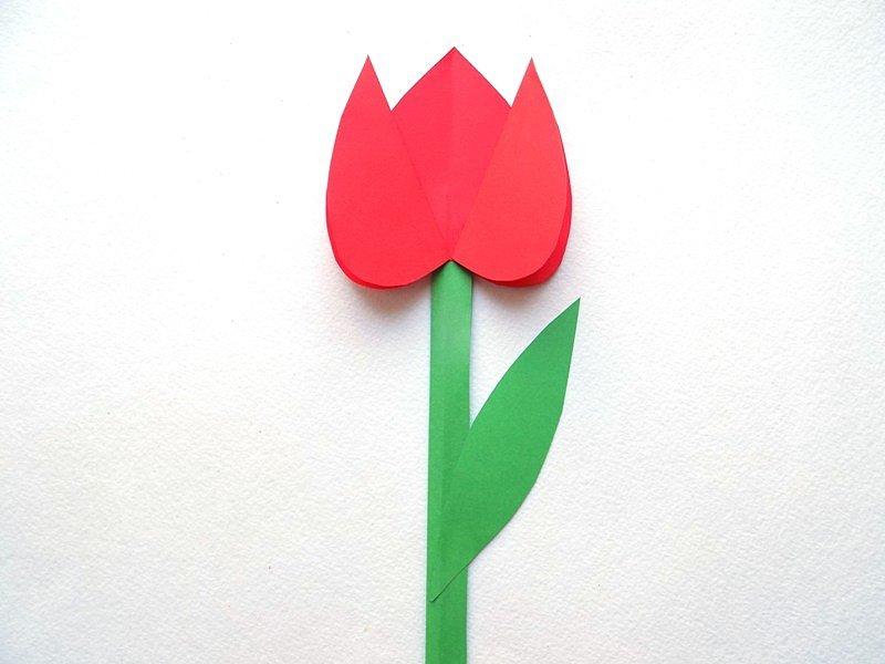 Тюльпан для открытки из цветной бумаги, мая открытка