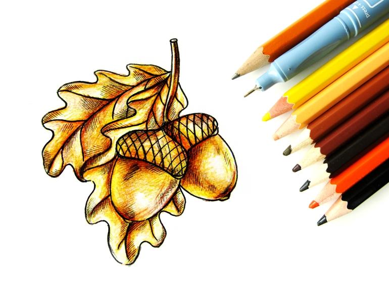 Как нарисовать жёлуди цветными карандашами