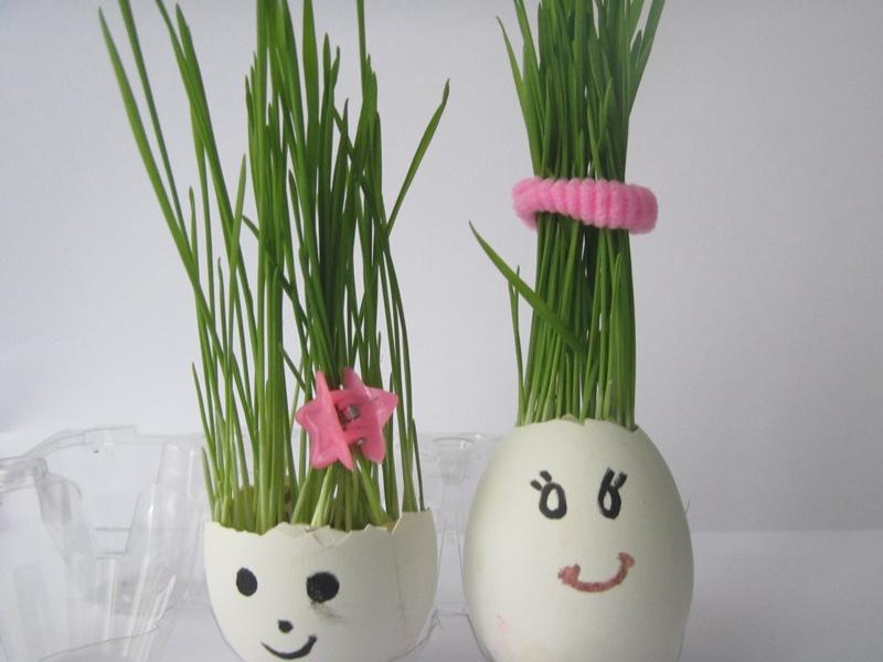 Как вырастить пшеницу в яичной скорлупе